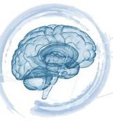 Webinar Neuro'
